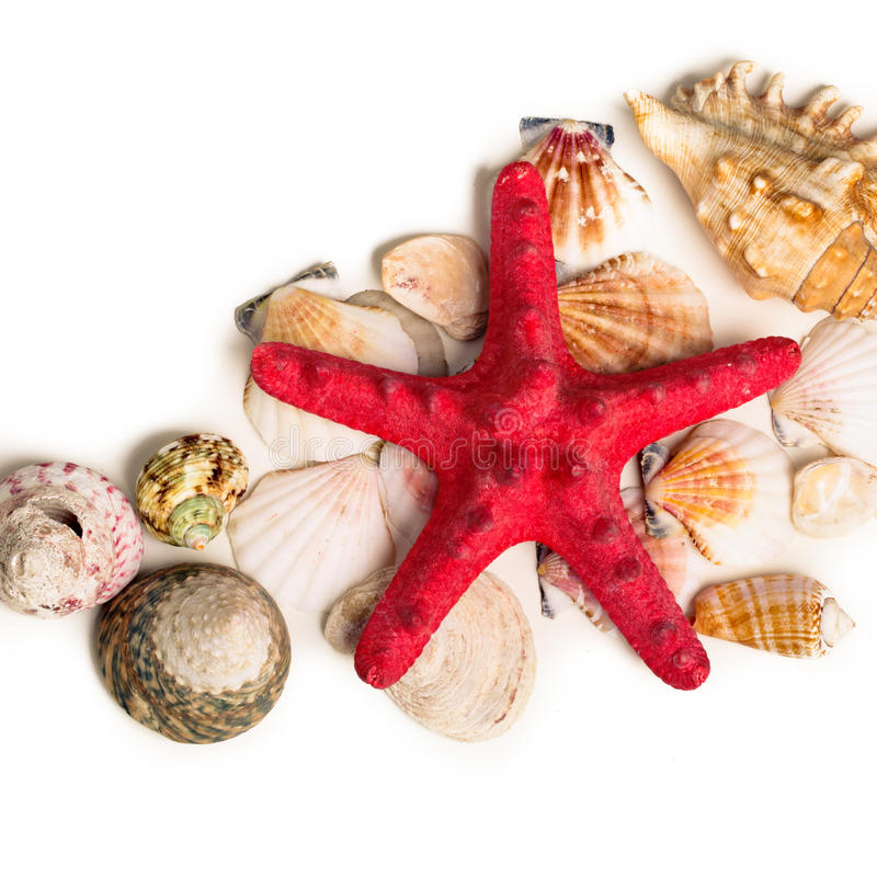 A red starfish and seashells lying on sand royalty free stock images