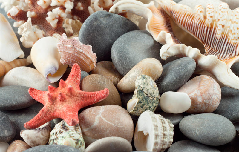 Download Red starfish with shells stock photo. Image of shell - 25723272