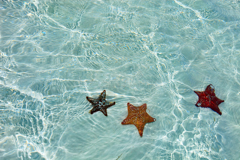 Red starfish. In a tropical water at Caribbean stock photo
