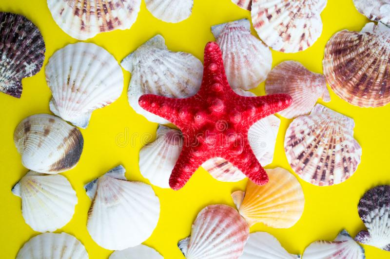 Red starfish and white seashells on yellow background royalty free stock images
