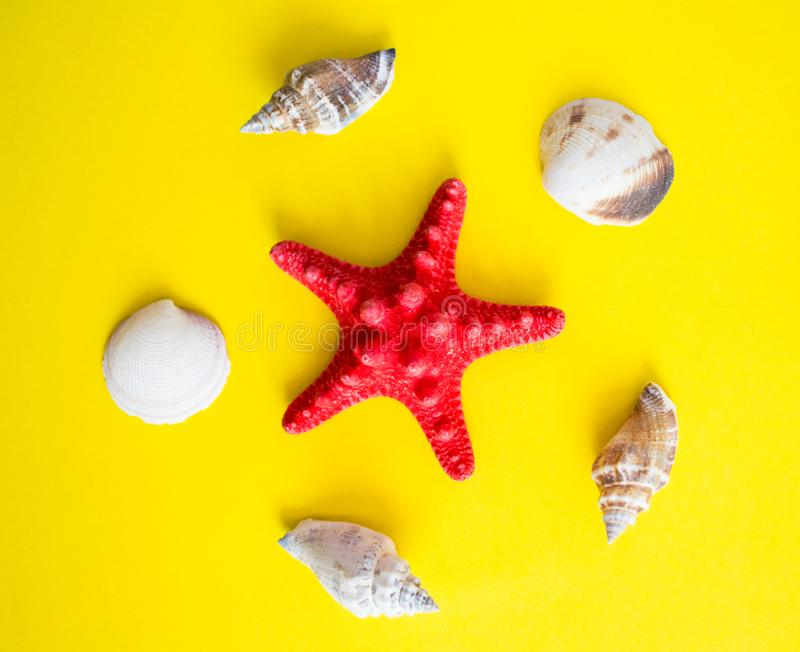 Red starfish and white seashells on yellow background royalty free stock photo