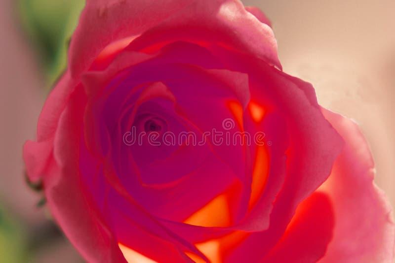 Download Red steg arkivfoto. Bild av studio, steg, natur, runt, blomma - 43764