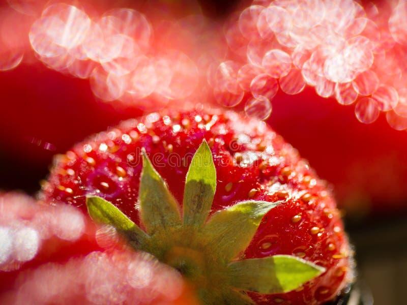 Red strawberries. Macro closeup, shallow DOF royalty free stock image