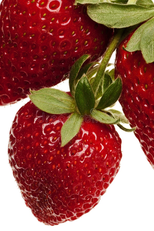 Red strawberries royalty free stock photo