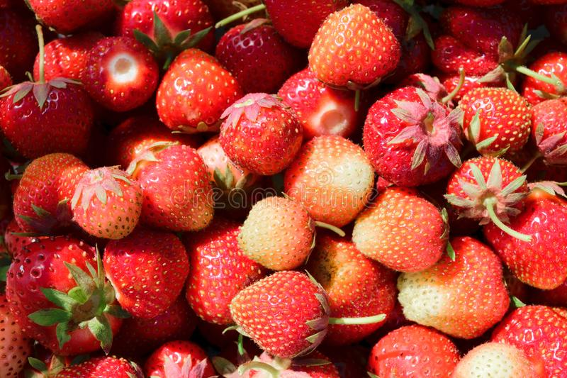Red Strawberries Background Surface Enlightened by Morning Sun royalty free stock photography