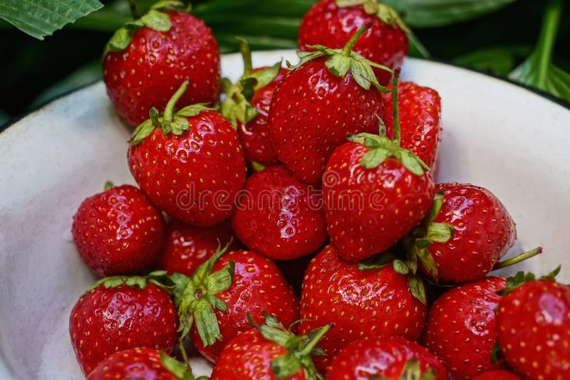 Red strawberries in a white bowl royalty free stock photos