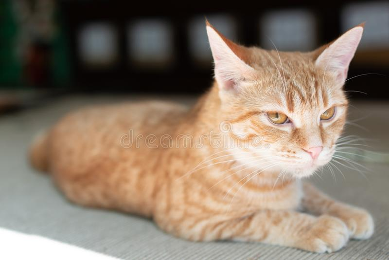 Red street cat hid in the shadow of the summer sun. Red street cat hid in the shadow of the bright summer sun stock photo
