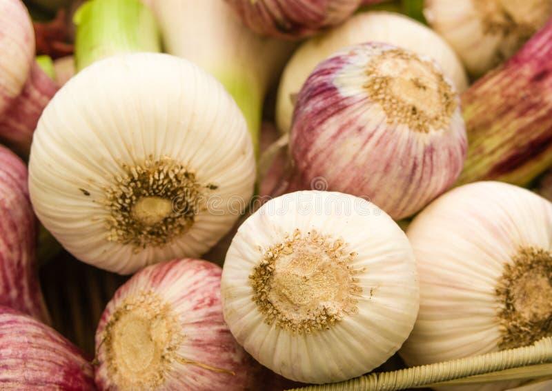 Red summer garlic at the market stock image