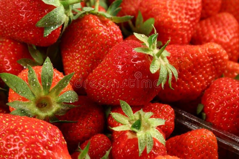 Red summer strawberries, seasonal fruit, macro stock image