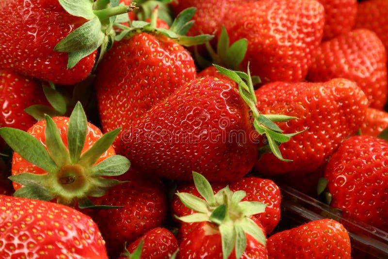 Red summer strawberries, seasonal fruit stock images