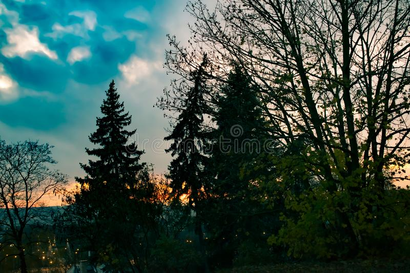Red sundown with blue sky and black trees. stock photos