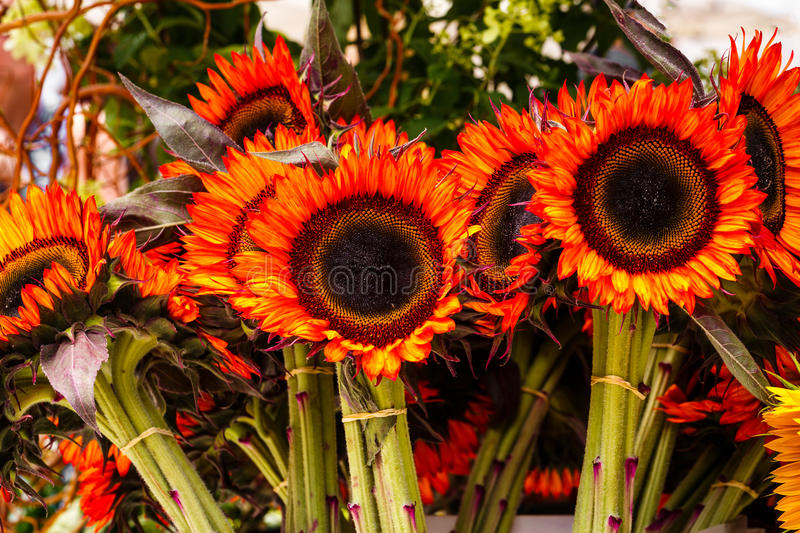 Red Sunflowers. At an Outdoor Market royalty free stock photo