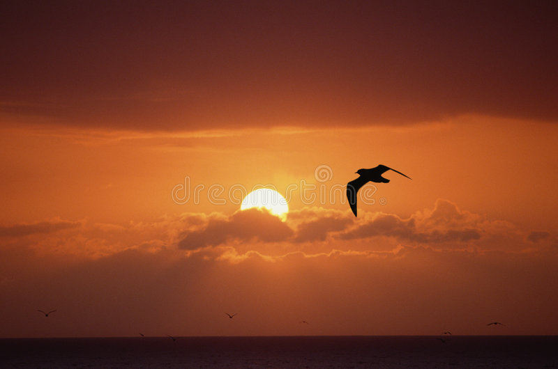 Red sunset stock images