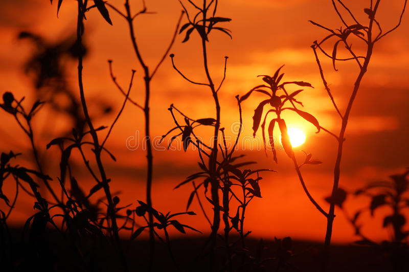 Red Sunset royalty free stock photos