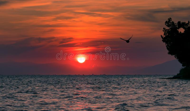 Red sunset with a bird flying across royalty free stock images