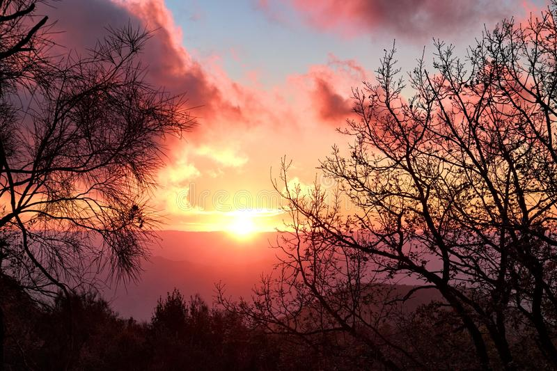 Red Sunset Framed By Tree Branches royalty free stock image