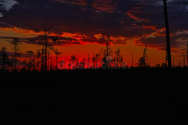 Red sunset. Outlined red sunset at forest bog royalty free stock image