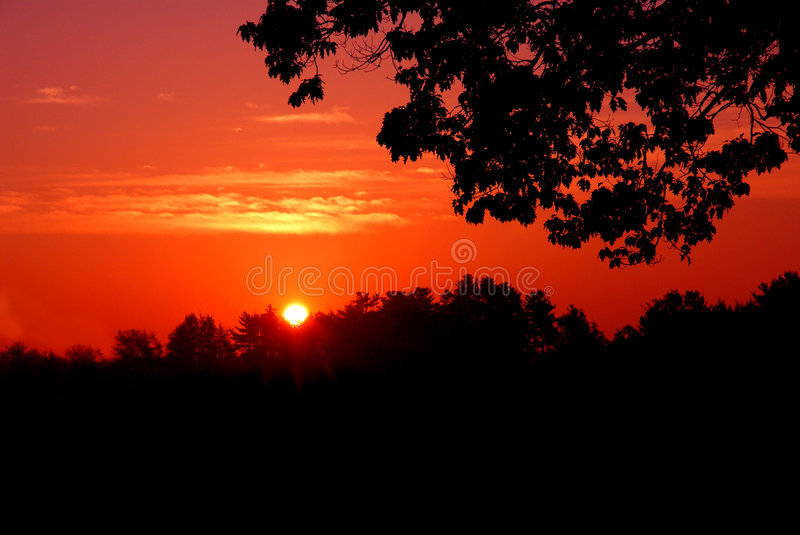 Download Red sunset silhouette stock photo. Image of vibrant, tree - 1534358