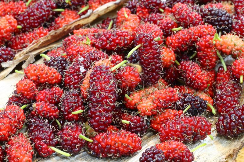 Red sweet mulberry fruits  Morus rubra. With selective focus royalty free stock photo
