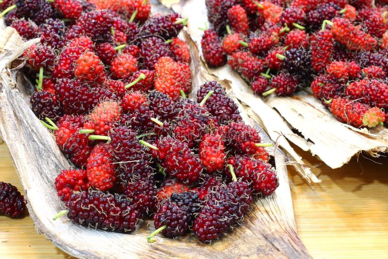 Red sweet mulberry fruits  Morus rubra. With selective focus royalty free stock images
