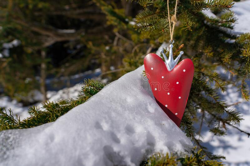 Red sweet strawberry is hanging on a snow covered branch of fir tree at Valentine`s Day stock images