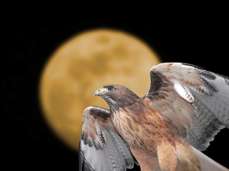 Red-tailed Hawk. A Red-tailed Hawk with wings spread, shown in front of the moon royalty free stock images