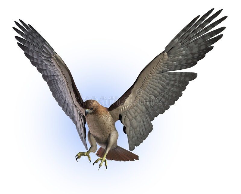 Red Tailed Hawk - includes clipping path vector illustration