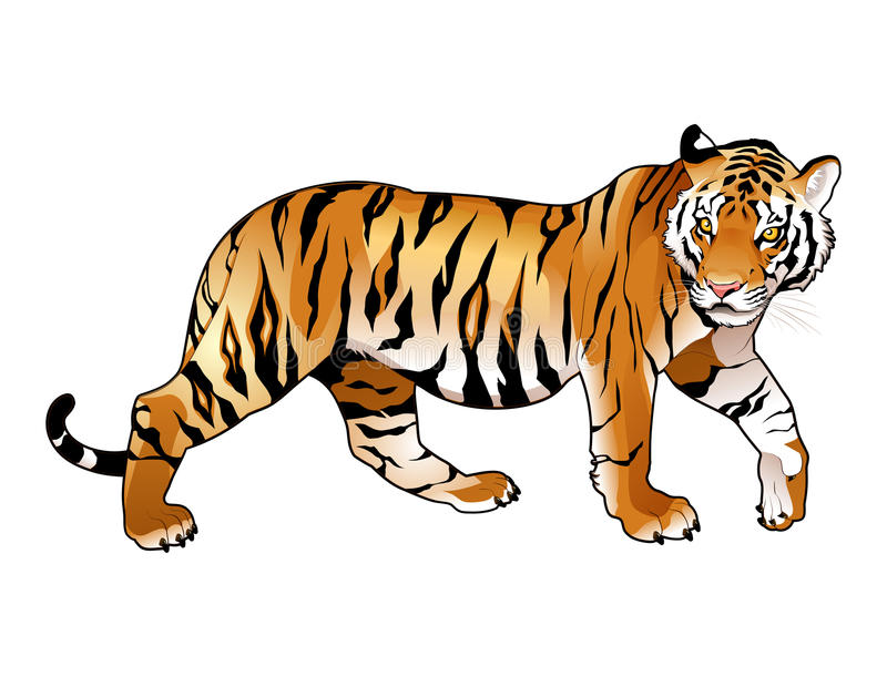 Red tiger. Cartoon and vector isolated animal