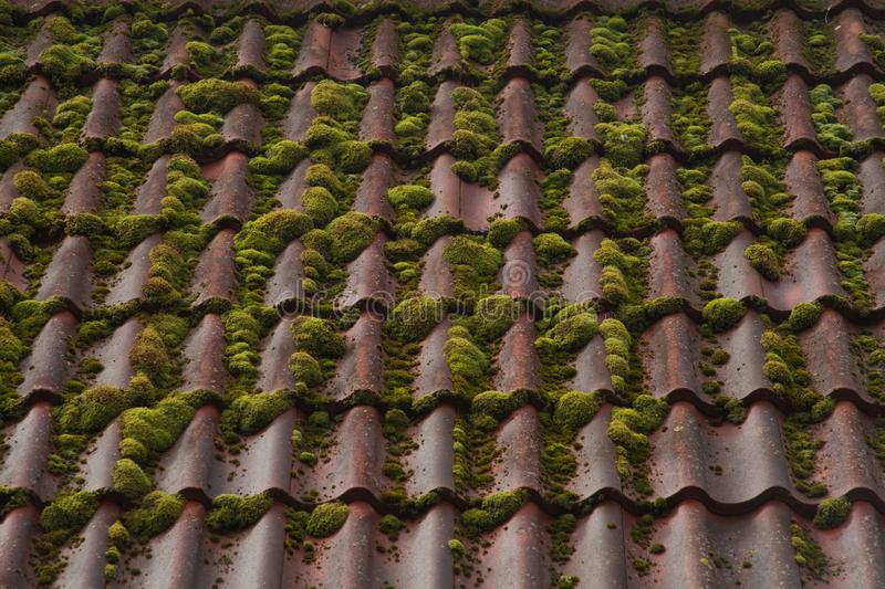Red tile roof background. overgrown roof texture. Red tile roof texture background shingle clay terracotta abstract architectural color cover design detail royalty free stock photos