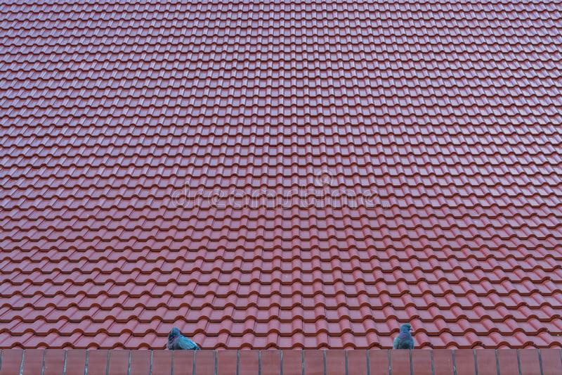 Red tile roofs. And bird royalty free stock photography