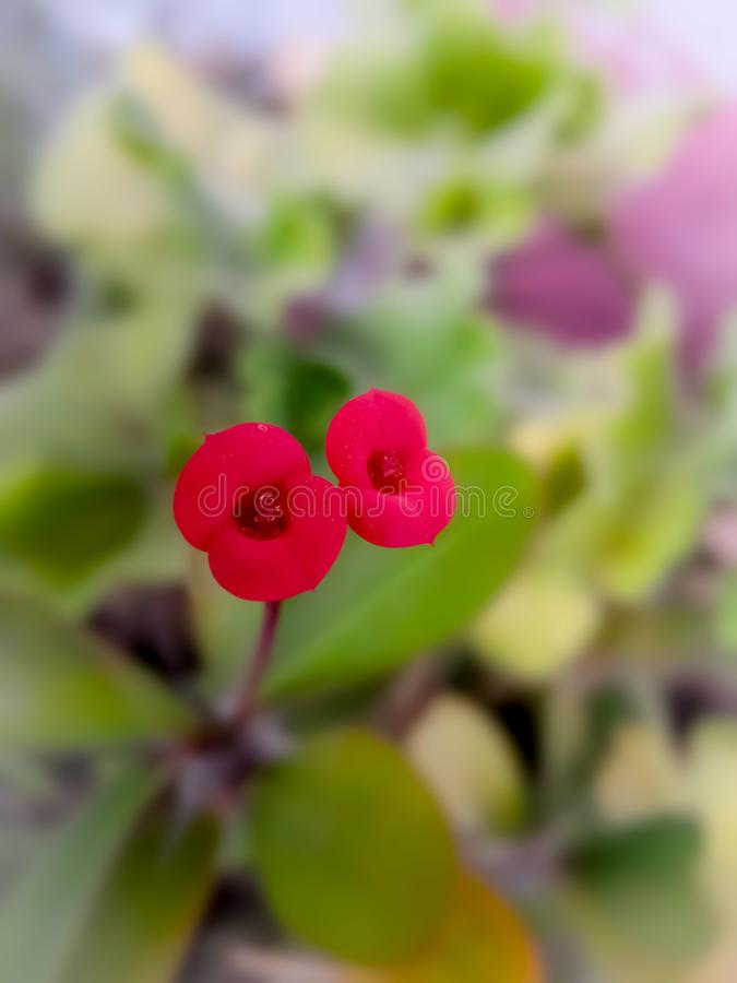 Red tiny flowers. Garden, colorful stock photo