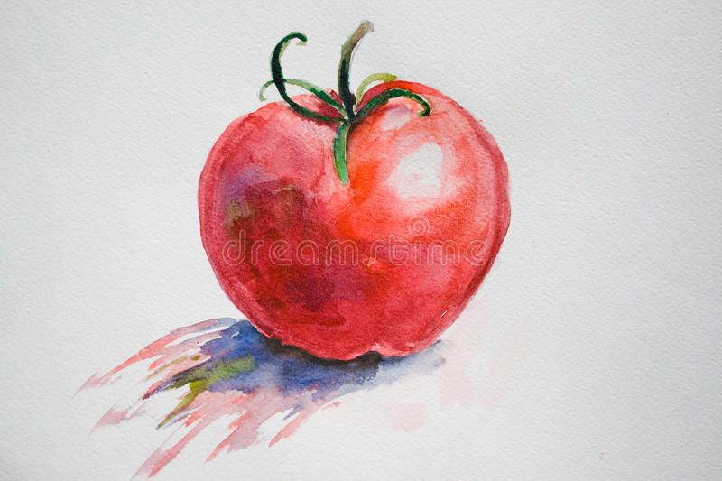 Red tomato. Watecolor illustration of red tomato vector illustration