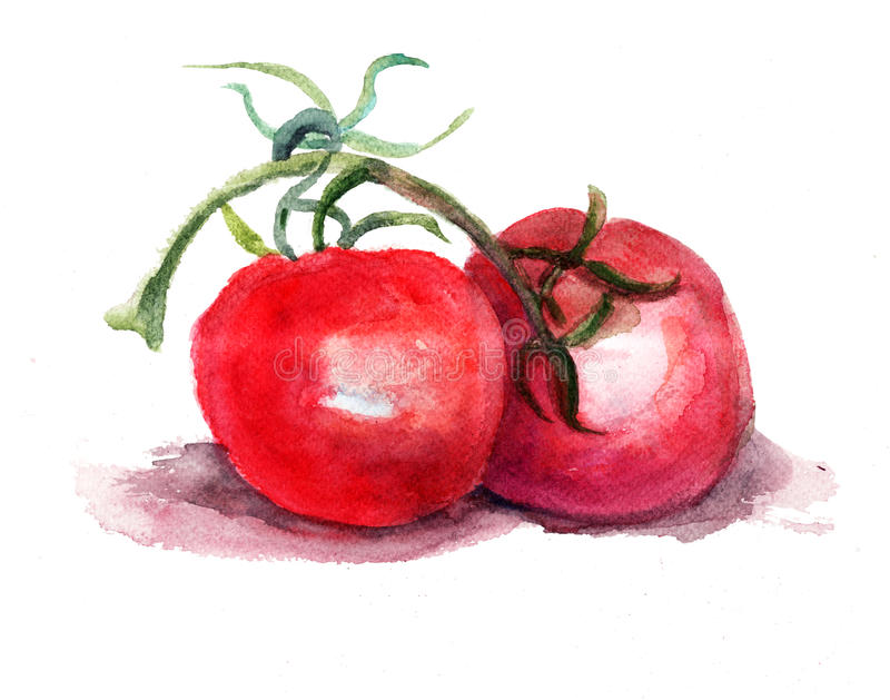 Download Red tomato stock illustration. Illustration of drawing - 26285116