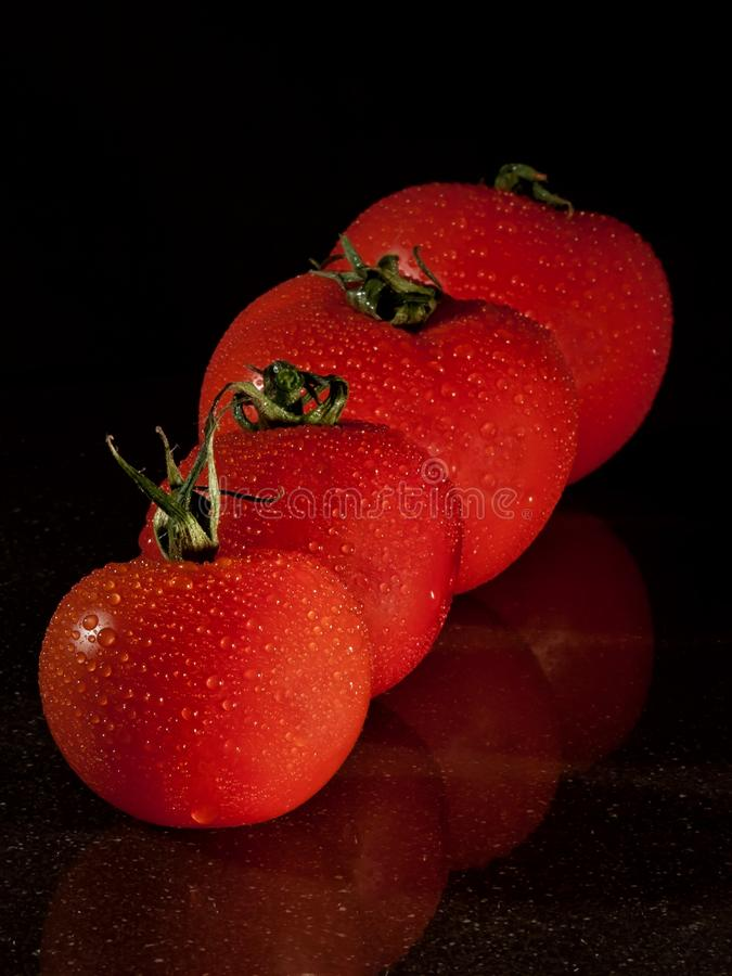 4 Red Tomato Filed Front Small to Large stock photos