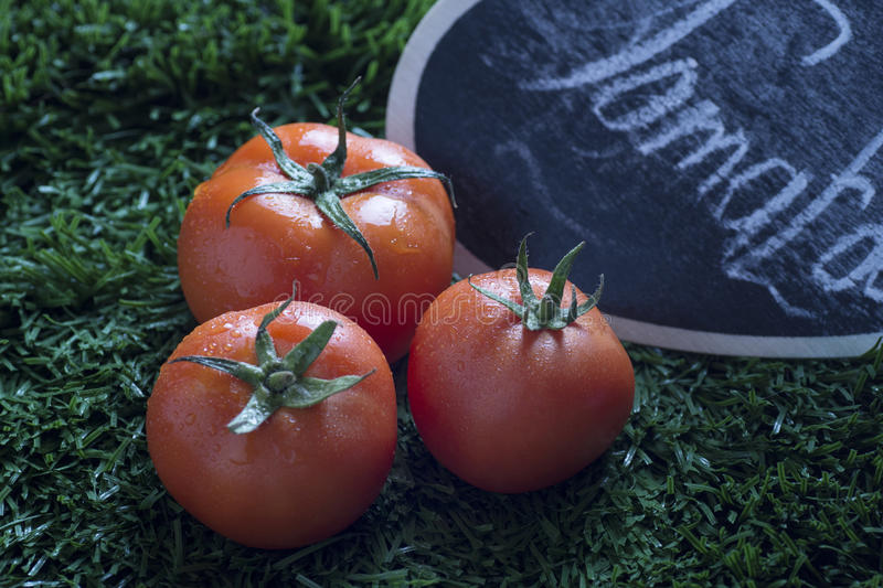red tomato on grass in winter royalty free stock photos
