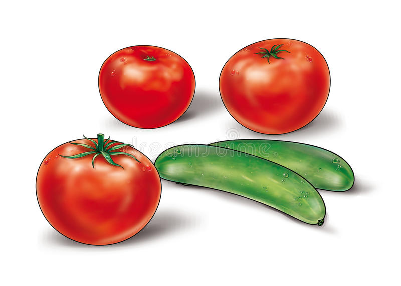 Red tomato and green cucumber still life Illustration. Beautiful ripe red tomatoes and green cucumbers on a white background. Still life illustration. High stock illustration