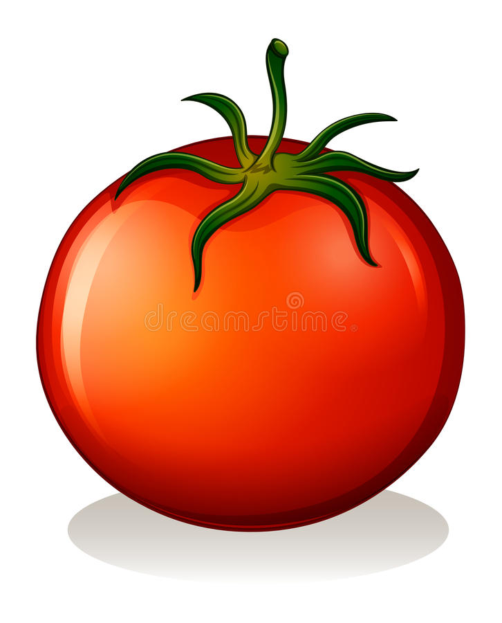 A red tomato vector illustration