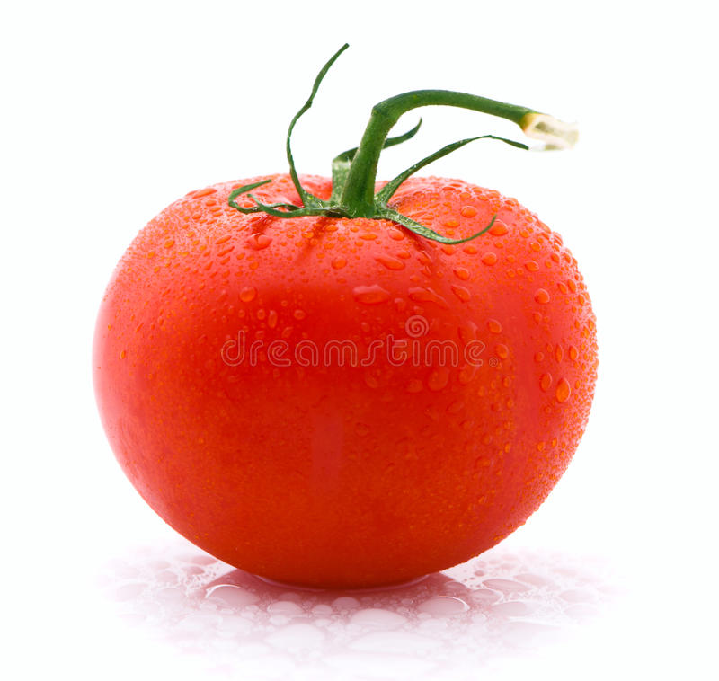 Red tomato isolated over white background stock photography