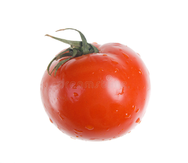 Red Tomato isolated type with side royalty free stock images
