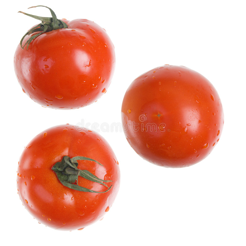 Red Tomato isolated type with side, royalty free stock photo
