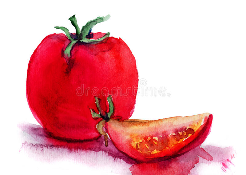 Red tomato. Watercolor illustration of red tomato stock illustration