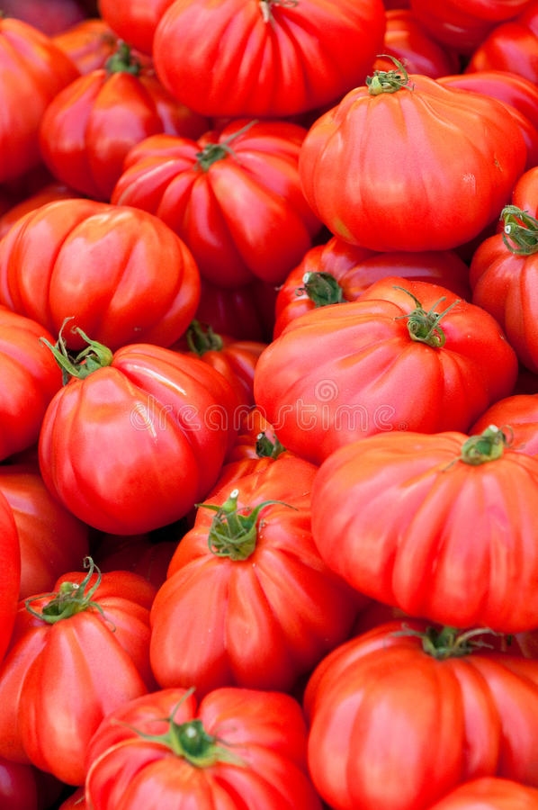 Red tomatoes. Fresh sweet red tomatoes background royalty free stock photo