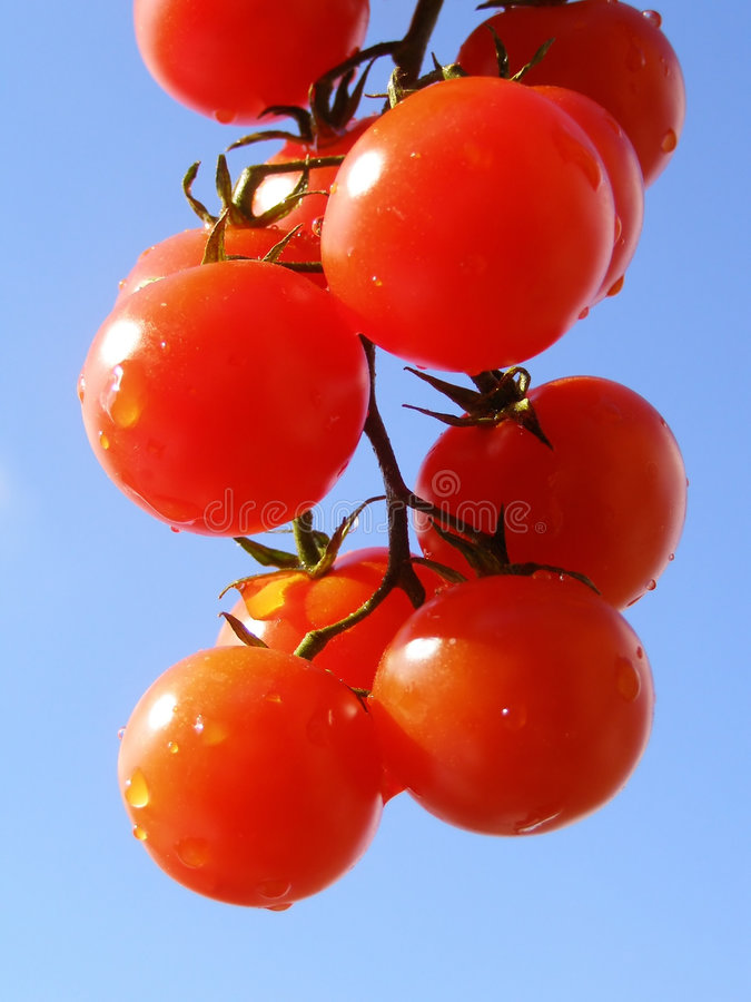 Red tomatoes stock photography