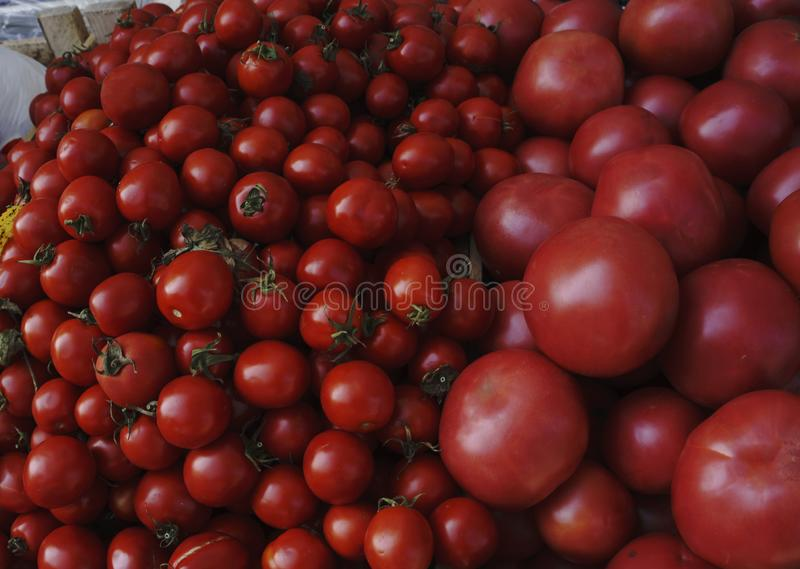 Red tomatoes background. Group of tomatoes.  royalty free stock photography