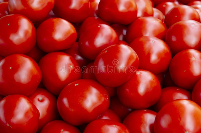 Red tomatoes background. Group of tomatoes.  stock photos