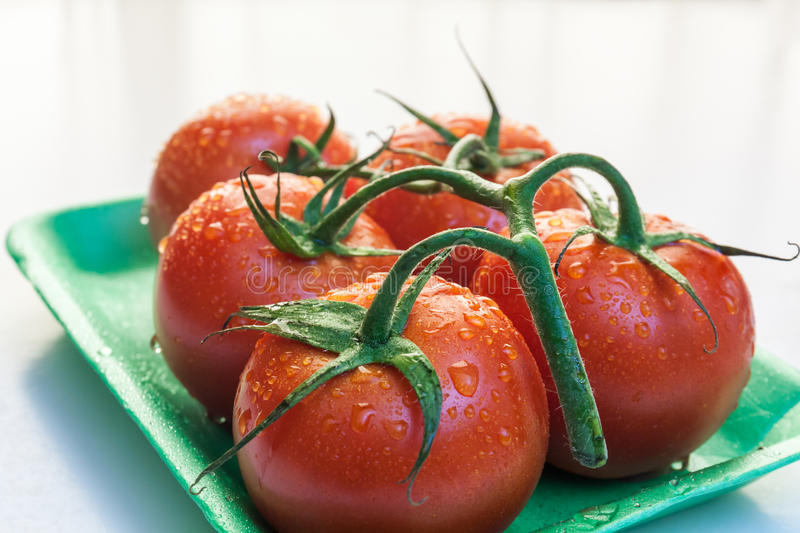 Red tomatoes in a plate. Near window with natural light stock image