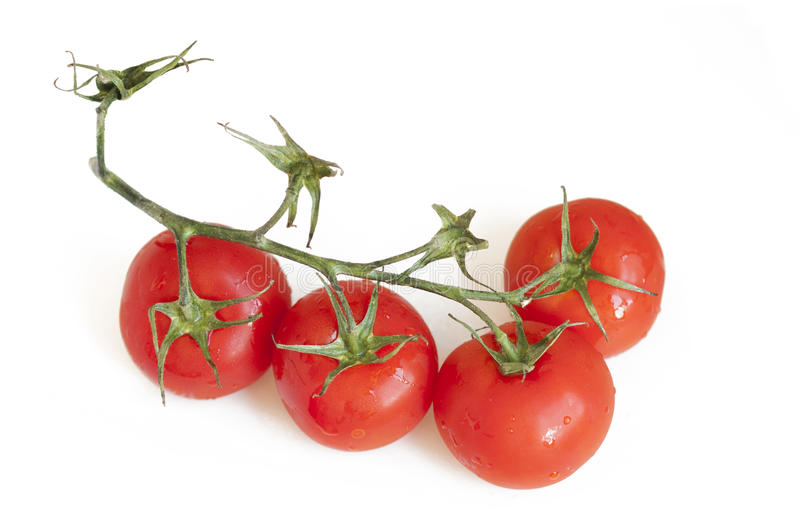 Red tomatoes on a vine royalty free stock photography