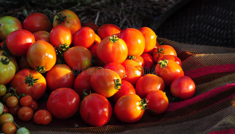 Download Red tomatos stock image. Image of green, full, diet, food - 25377975