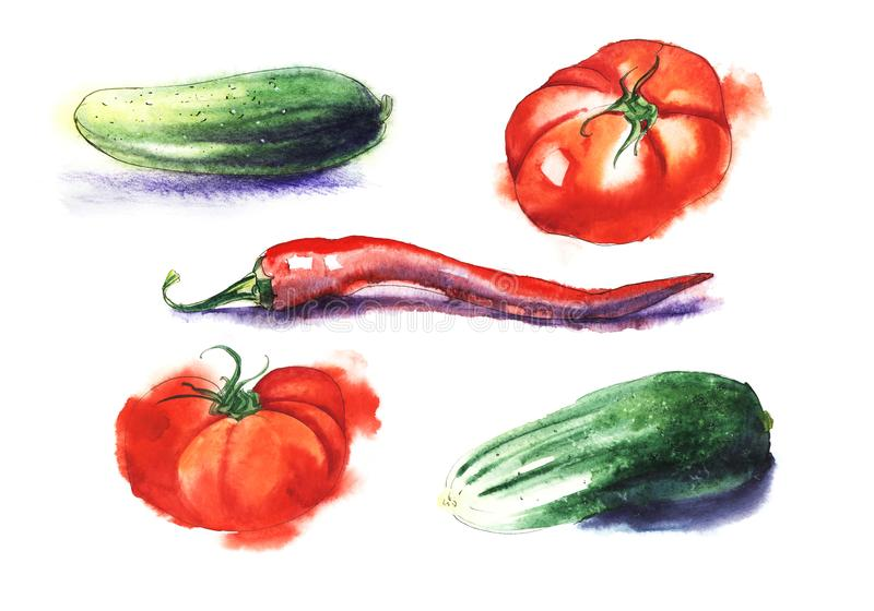 Red tomatos, chili pepper, green cucumber. Set of five hand drawn watercolor illustrtion on a textured paper. Isolate on a hite. Hand drawn watercolor royalty free illustration