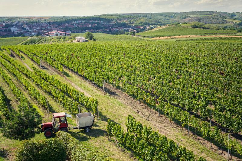 Red tractor ready for harvesting grapes in vineyard, sunny autumn day, Southern Moravia, Czech Republic. Aerial view stock photography